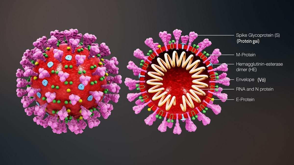 COVID-19 Cells
